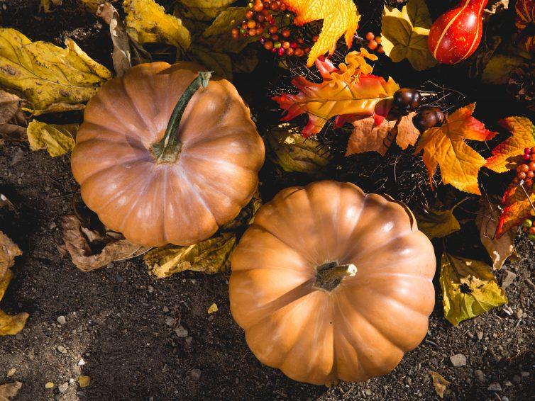Haal de herfstsfeer in huis