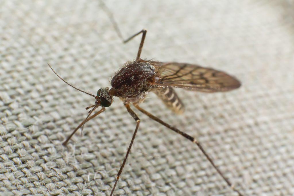 Muggen overlast